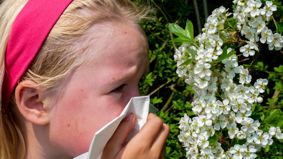 Pollenallergie Ratgeber